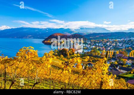 Spiez Castle and vineyards, Berner Oberland, Switzerland - Stock Image