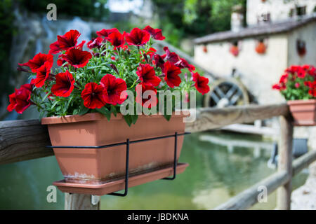 Red flowers in a flowerpot with cottage with a water mill in the background - Stock Image