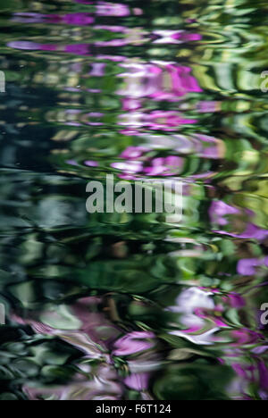 Abstract reflection of pink flowers and greenery in water. - Stock Image