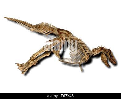 Dinosaurier Tyrannosaurus rex / dinosaur Tyrannosaurus Rex skeleton - Stock Image