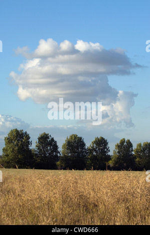 July 2010Cloud formation by evening light. Mature oil seed rape field in foreground with blue sky and clouds and - Stock Image