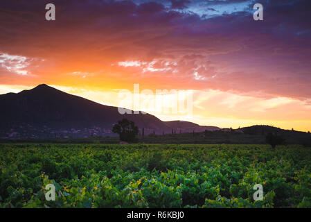 Mountain valley with vineyard at rays of sunset - Stock Image