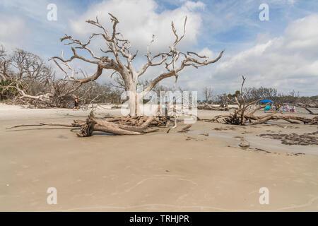 Driftwood Beach Jekyll Island Brunswick, Georgia USA - Stock Image