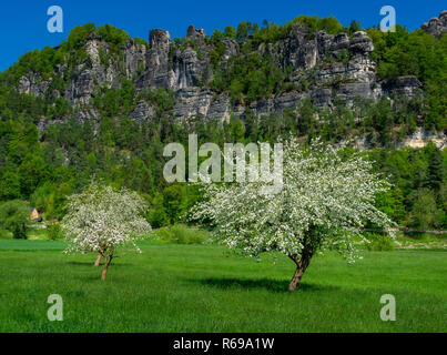 Blooming Trees In A Meadow In Front Of The Bastion In The Elbe Sandstone Mountains - Stock Image