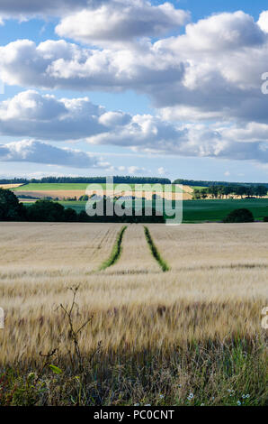 A view looking ou across a field of barley at hills in the distance. - Stock Image