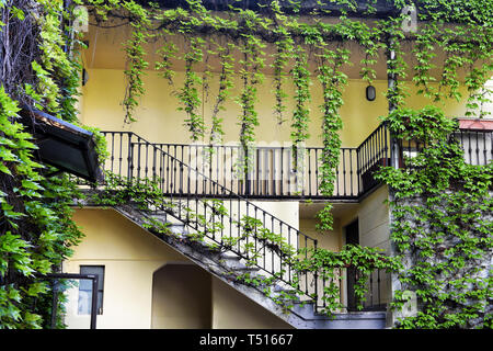Ivy creeper plants hanging from the roof and spread around stairs and balcony on the courtyard of residential house with yellow walls - Stock Image