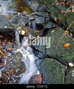 A stream in Autumn - Stock Image