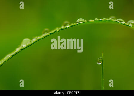 Closeup of morning dew in meadow - Stock Image