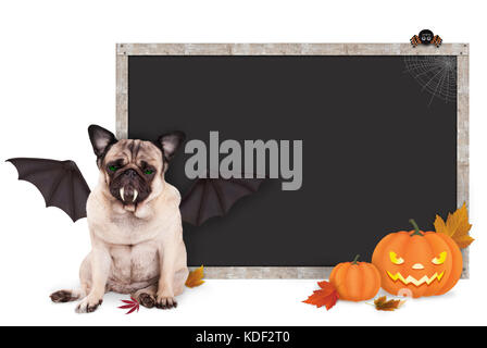 pug dog dressed up as bat for halloween, with blank blackboard sign and pumpkins, isolated on white background - Stock Image