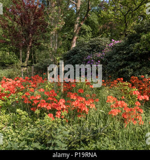 A colourful flower display in Clingendael Park, The Hague (Den Haag), Netherlands. - Stock Image