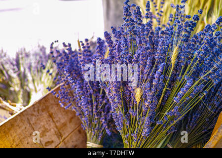 Bunch of dried purple aromatic French lavender flowers from Provence close up - Stock Image
