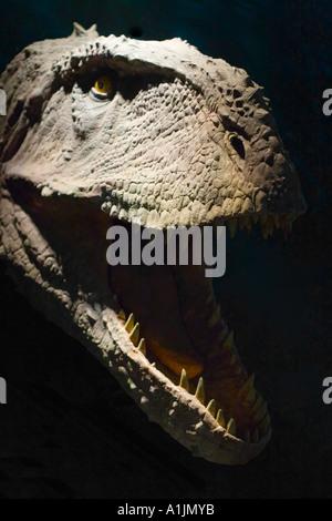 Life-size dinosaur model head - Stock Image
