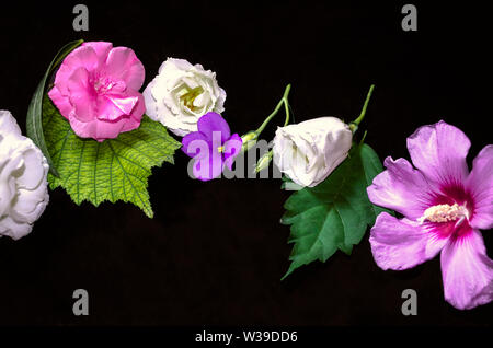 Black background with raspberry oleander on leaves,white Lisianthus with buds, small violets  and purple hibiscus - Stock Image