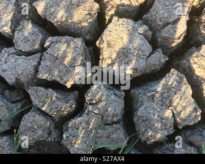 Dried up pond and drought conditions following lack of rain in the English Midlands. - Stock Image