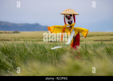 Scarecrow with yellow and red dress, as well as flower hat in field of barley on an island off Jeju, on a windy gray day - Stock Image