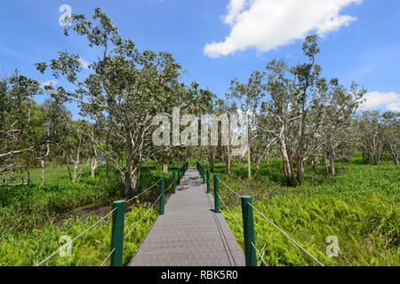 Paperbark trees and Olive Hymenachne grass which has invaded the open water of Abattoir Swamp, a popular birdwatching spot, Atherton Tablelands, Far N - Stock Image