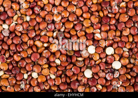Red quinoa background close up full frame. - Stock Image