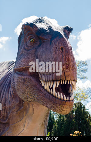 Tyrannosaurus Rex a predatory theropod dinosaur that lived in the Cretaceous period on the island continent Laramidia which is now North America - Stock Image