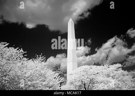 Washington Monument, Washington, D.C. - Stock Image