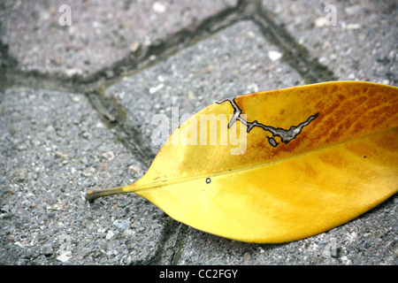Yellow leaf on concrete with interesting pattern burnt into it - Stock Image
