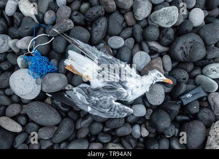 Dead Gull on beach near plastic rubbish. - Stock Image