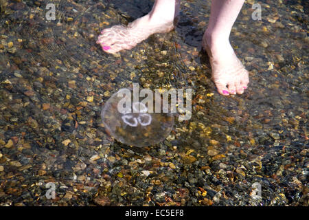 bare feet in front of jellyfish - Stock Image