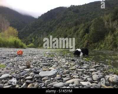 Dog at the river - Stock Image