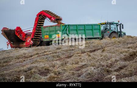 John Deere tractors harvesting carrots. - Stock Image