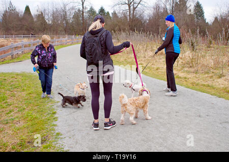 Three Women walking their dogs on leashes in Blakeburn Lagoons Regional Park, Port Coquitlam, B. C. when the dogs decided to become acquainted. - Stock Image