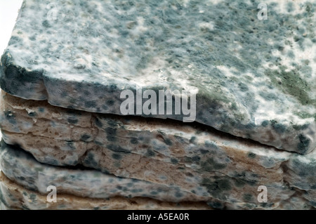 Mouldy bread food - Stock Image