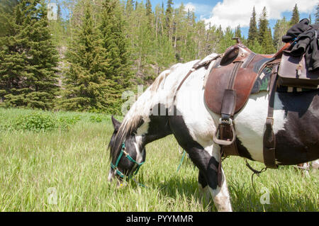 Horse grazing on tall grass in a meadow. - Stock Image
