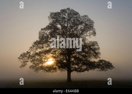 Early morning mist, Usk Valley, S. Wales - Stock Image