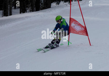 Young boy skier speeds down the giant slalom course during training session. Golte mountain, Slovenia. - Stock Image