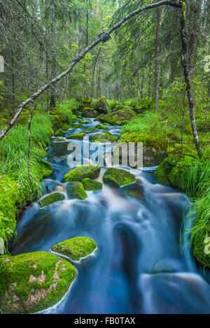 Small flowing stream in forest landscape - Stock Image