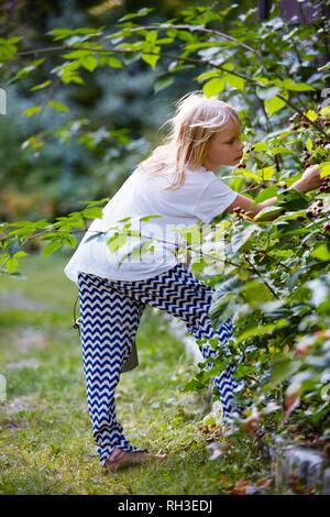 Girl picking berries - Stock Image