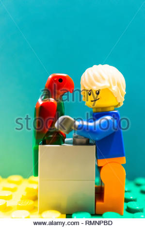 Poznan, Poland - February 13, 2019: Lego man with long hair taking care of a red parrot. People like to have parrots as pet since they are able to rep - Stock Image