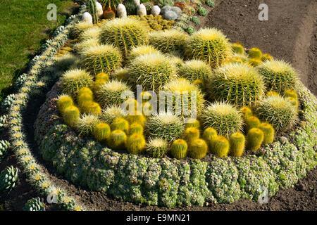 Cactus garden in public park, Norrkobing, Sweden, under establishment - Stock Image