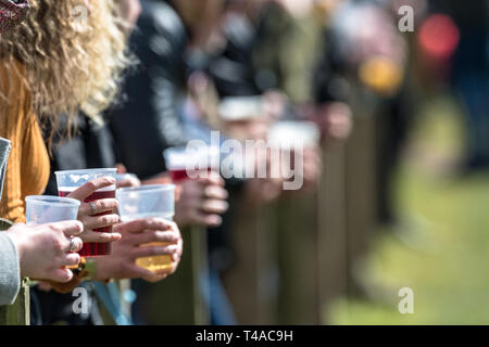Men and women at a Rugby game holding pints of beer. - Stock Image