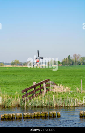 Waterways of North Holland and view on traditional Dutch wind mill and cows on green pasture, Dutch lifestyle landscape - Stock Image