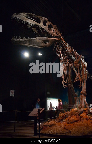 Tyrannosaurus Rex - Stock Image
