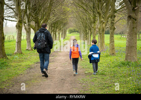 Lime tree Walk at Castleward in County Down - Stock Image
