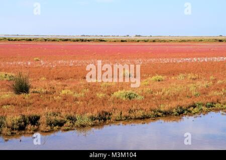 Landscape of Camargue, Provence, France - Stock Image