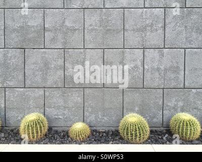 Cactus in front of building, Palm Springs, California - Stock Image