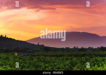 Green grapeyard at mountain valley at twilight. Nature landscape with beautiful sky - Stock Image