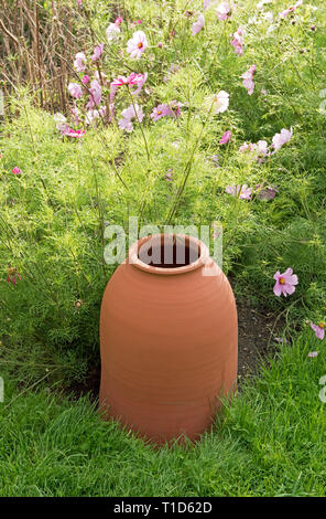 Terracotta rhubarb forcing pot with pink Cosmos behind - Stock Image