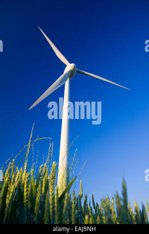 Windmill in a field of crop with blue sky - Stock Image