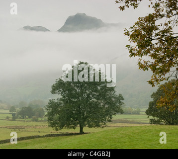 Langdale Pikes towering over a tree and shrouded in mist - Stock Image