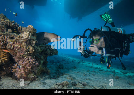 Female scuba diver  and video photographer approaches moray eel in coral reef under dive boats. Red Sea, Egypt, September, 2018 - Stock Image