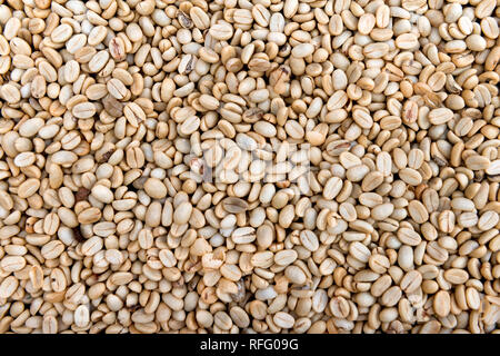 many raw dry  natural coffee seeds,before roasting - Stock Image