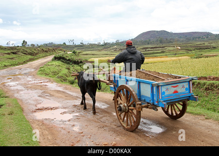Young Malagasy Boy and Ox Cart, Madagascar, Africa - Stock Image